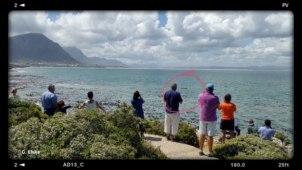 Cliff Path Walk, Southern Right Whale, Hermanus, Walker Bay
