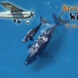 View the whales from the air